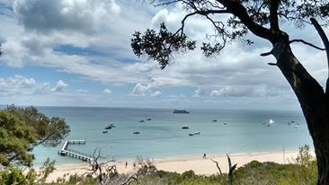 Picture of Shelly Beach in Portsea