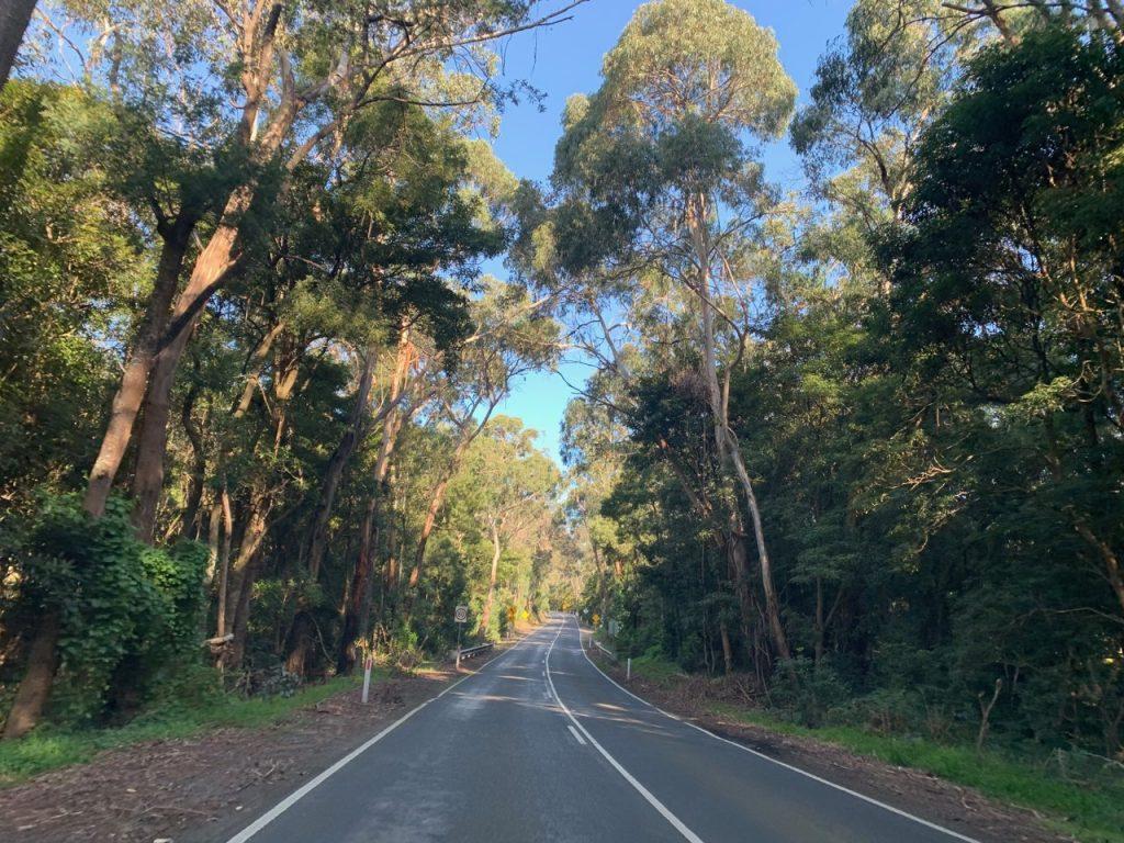 A road through the trees in Merricks
