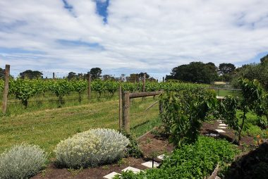 Small garden at a winery in Balnarring